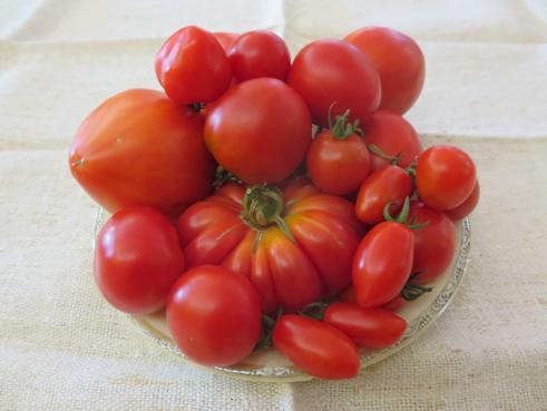 Tomatenmix Rot