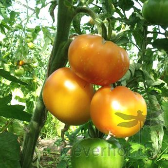 Freckled Child, mehrfarbige Früchte