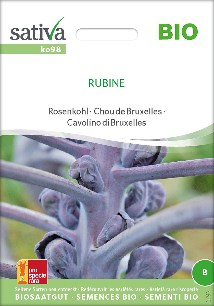 Saatgut Rosenkohl Rubine -S-