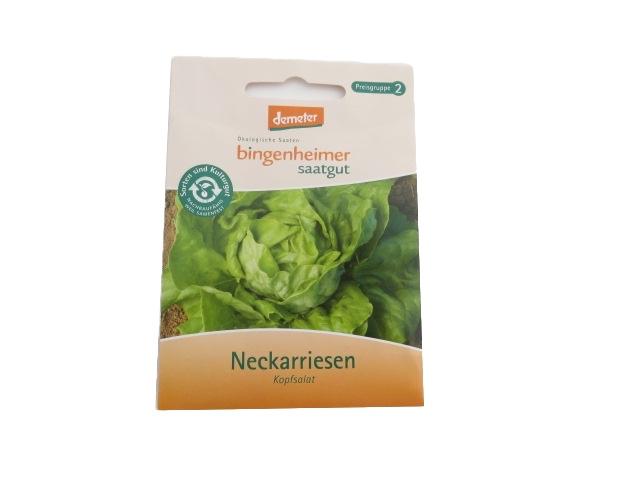 Kopfsalat Neckarriesen