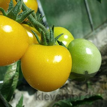 Sun Baby, kleine Früchte