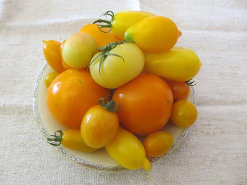 Tomatenmix Gelb