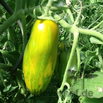 Grün gestreifte längliche Tomatenfrucht
