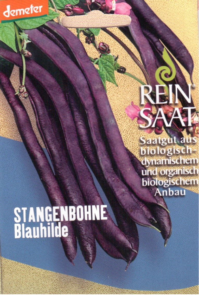 Saatgut Stangenbohne Blauhilde -R-