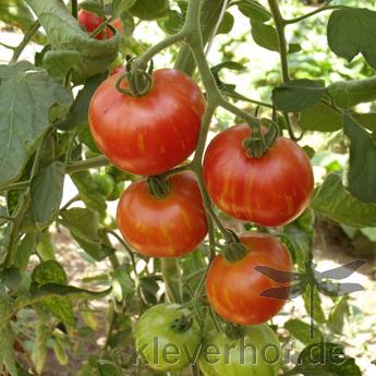 Rotgelb Gestreifte, mehrfarbig-gestreifte Früchte