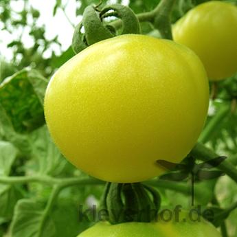 Transparent, weisse Früchte