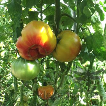 Multi Color, mehrfarbige Früchte