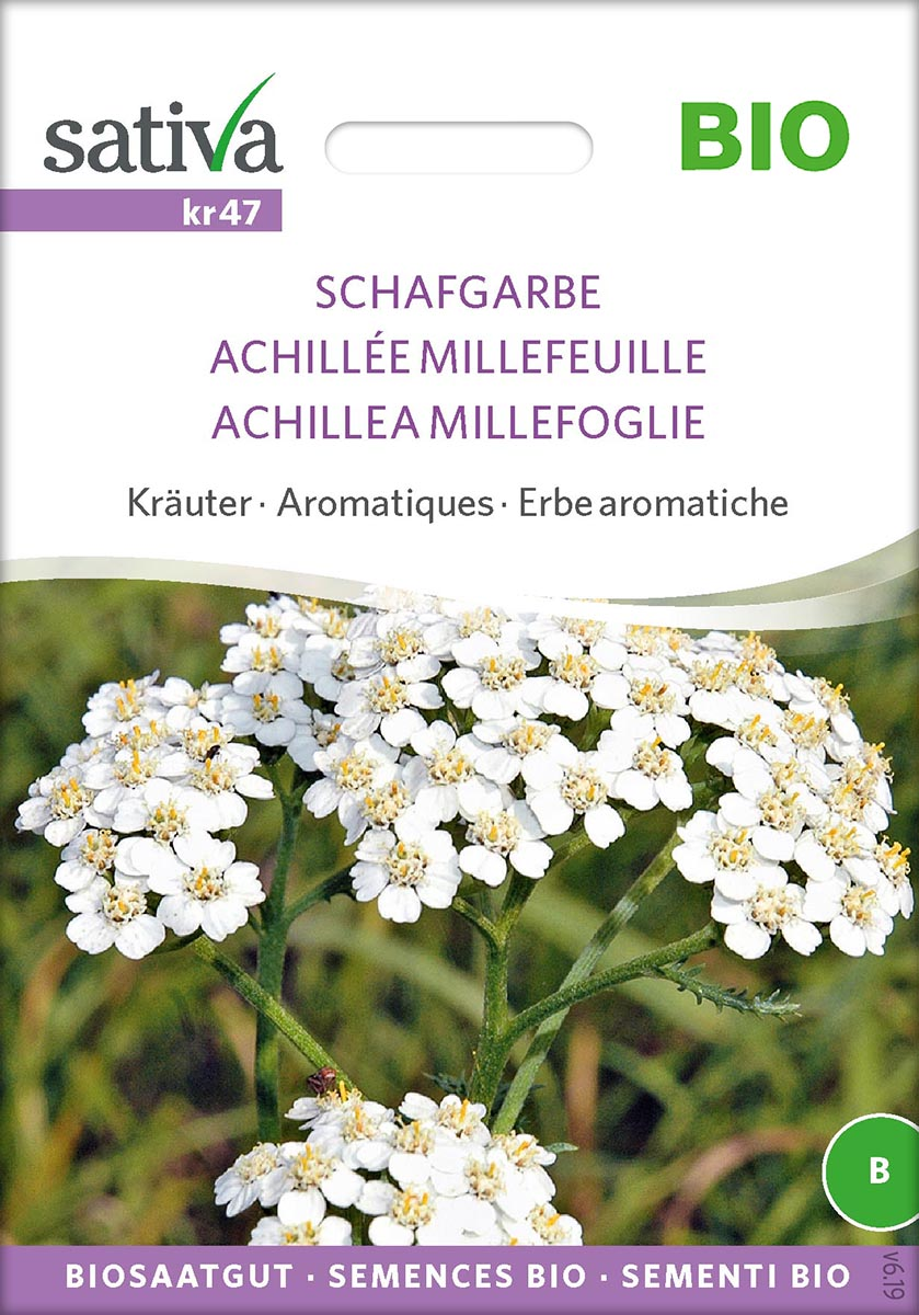 Saatgut Schafgarbe -S-
