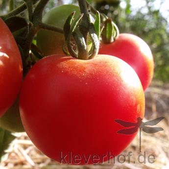Rote Demeter Tomatenvielfalt