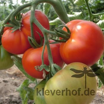 Echter Roter Tomaten Geschmack