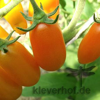 Datterini Orange, kleine Früchte