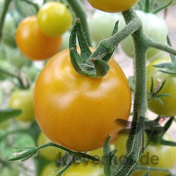 Orange Berry, klein bis mittelgrosse Früchte