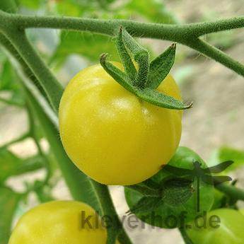 Zitronentraube, kleine Früchte