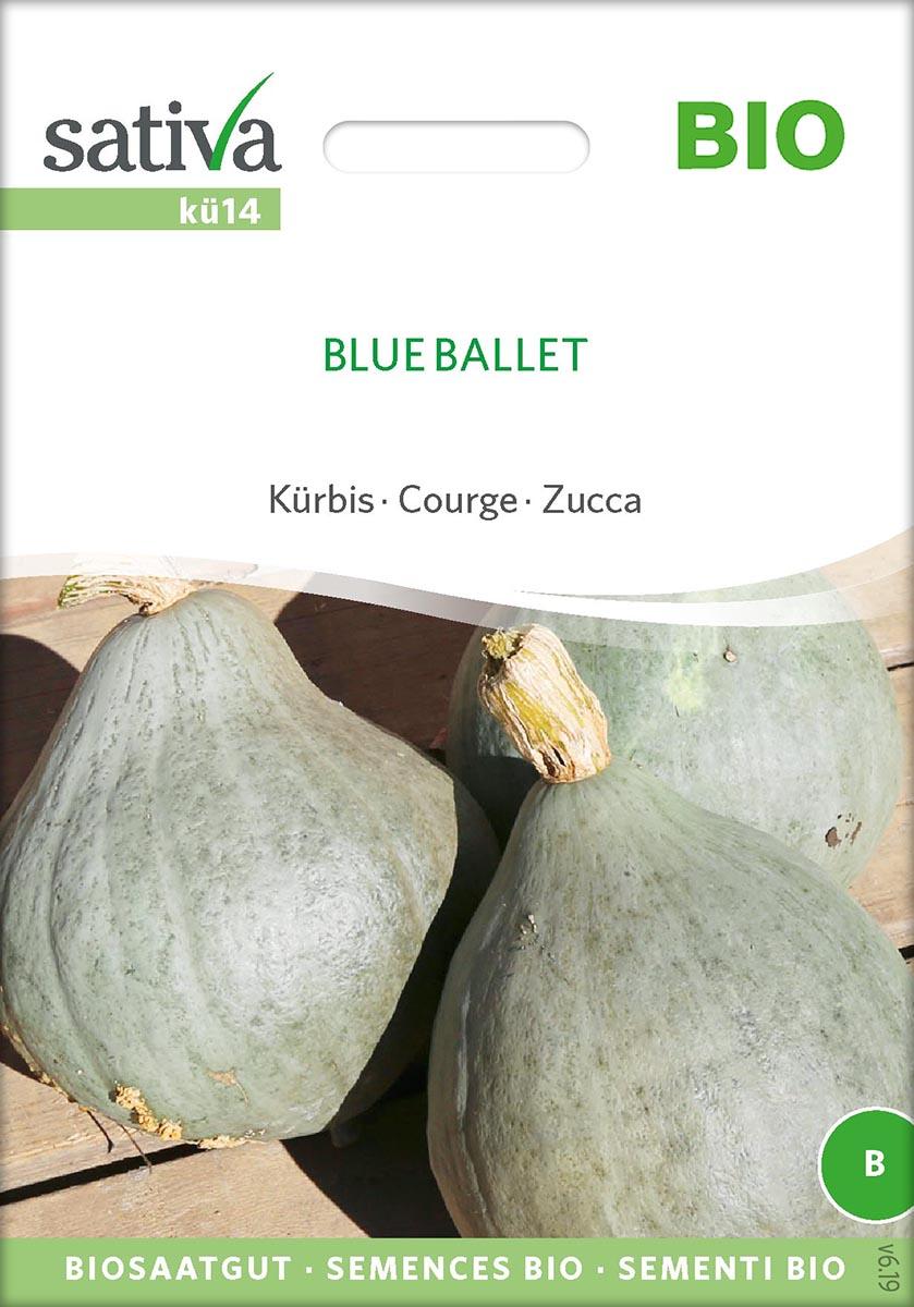 Saatgut Kürbis Blue Ballet -S-