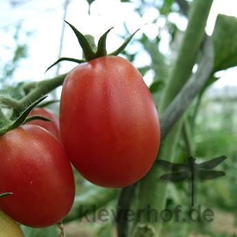 Rote Alte Tomatensorte