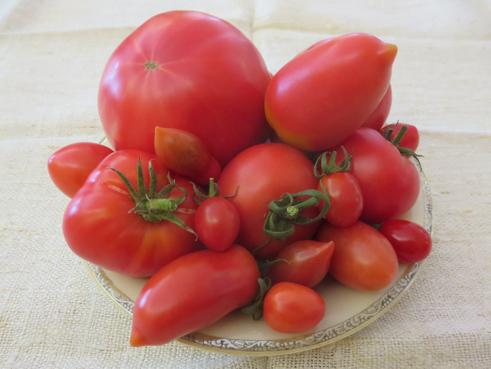 Tomatenmix Pink