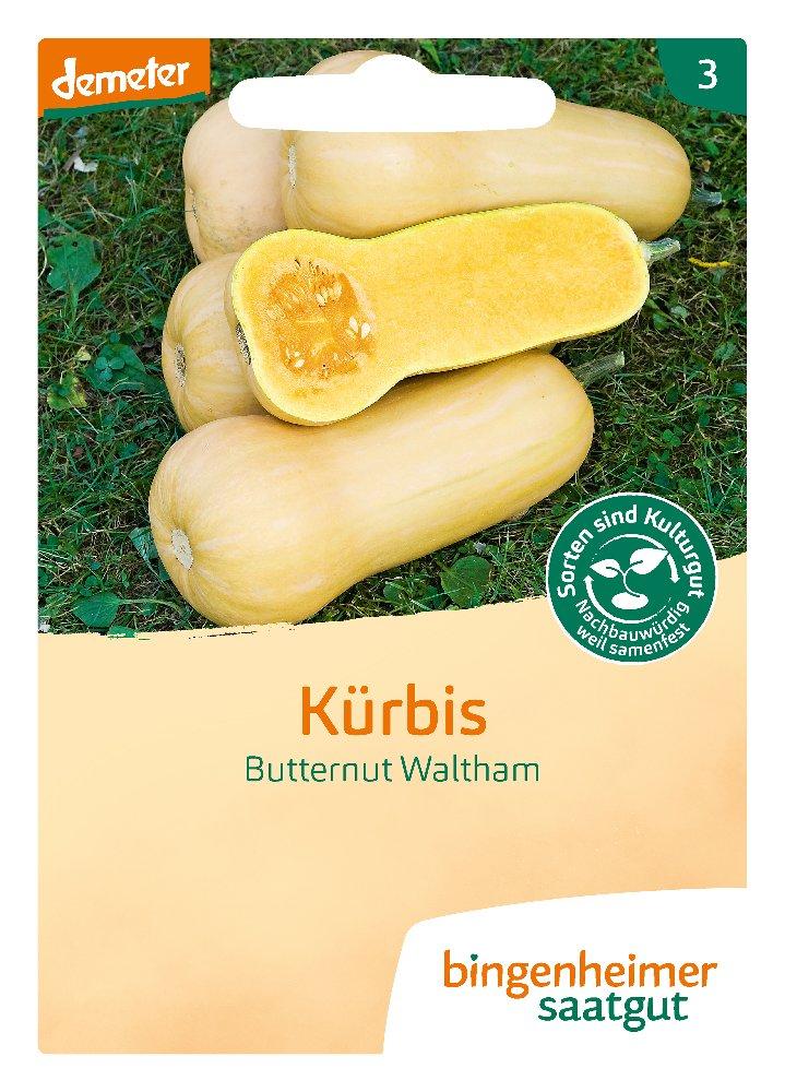 Saatgut Kürbis Butternut Waltham -B-