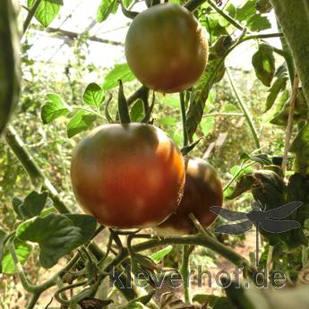Kumato, braune bis schwarze Früchte