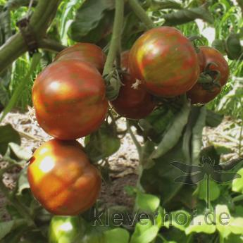 Orange gestreifte Tomatensorte