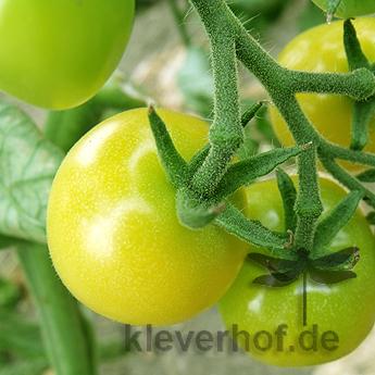 Gelbe und Weiße Tomatensorte