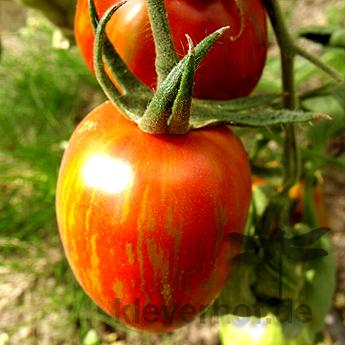Tie Dye Heart, mehrfarbig-gestreifte Früchte