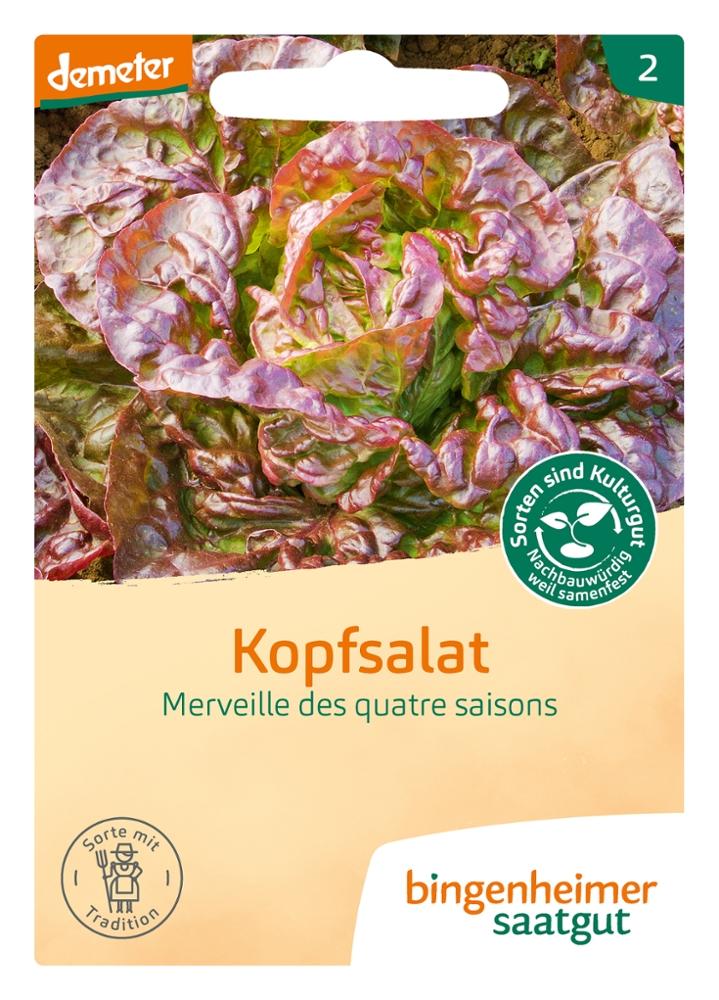Kopfsalat Merveille des quatre saisons -B-