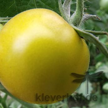 Lime Green, kleinwüchsige Pflanzen